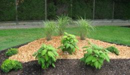 Substrat de plantation