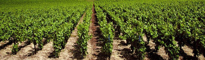 Vignes et arboricultures