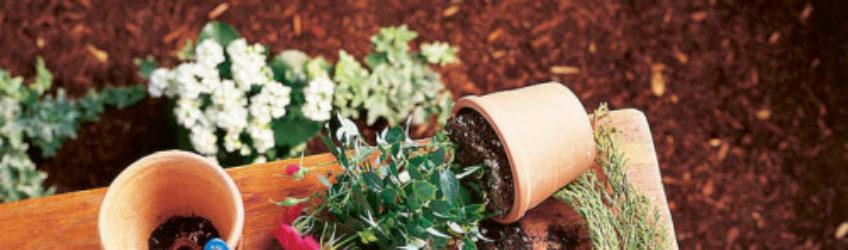Jardinage conseils de la grande jaugue pour le mois de for Jardinage conseil