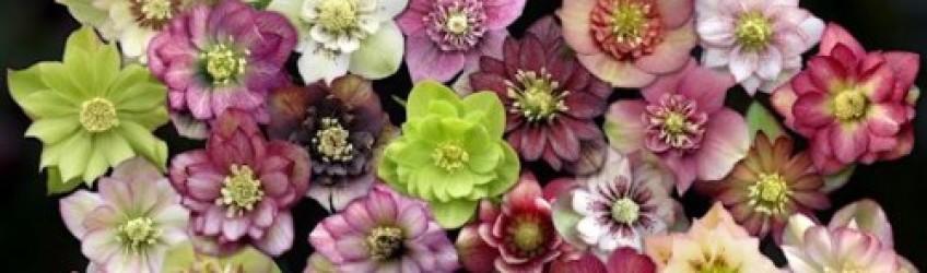 Quelles fleurs pour votre jardin d\'hiver ? La Grande Jaugue vous dit ...