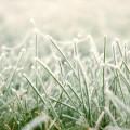 Eviter les mauvaises surprises des dernières gelées